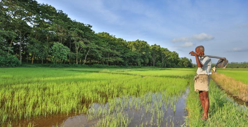 Setting - paddy fields