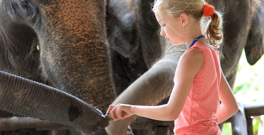 Elephant feeding time