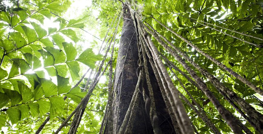 Local Rainforest