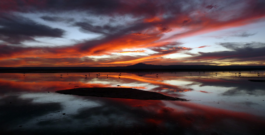 Flamingos Sunset