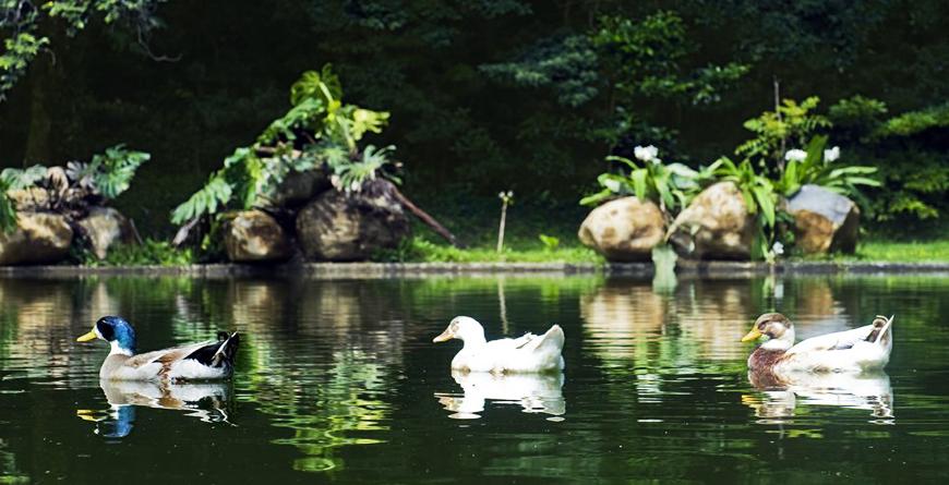 Spring Water Pond
