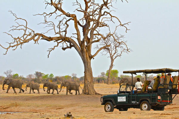 Imvelo Game Drive