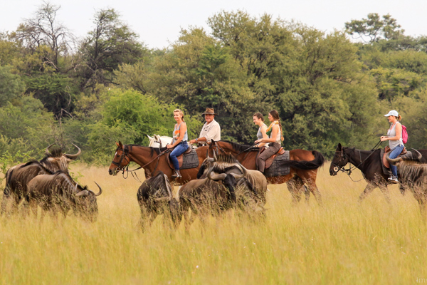 Imvelo Safari Lodges Camelthorn Riding Safari