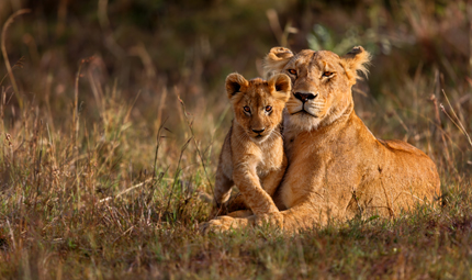 Lioness and Cub, Courtesy Shutterstock