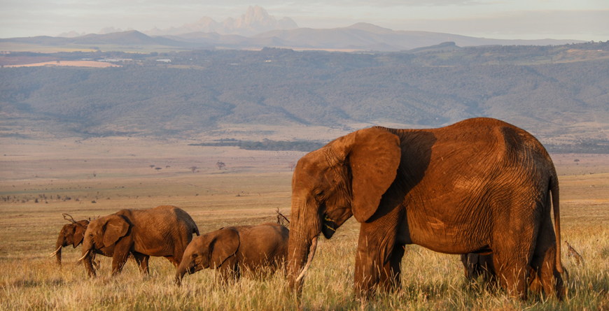 Elephants Courtesy Lewa House