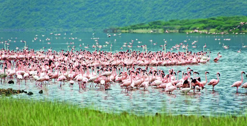 Lake Bogoria Flamingos