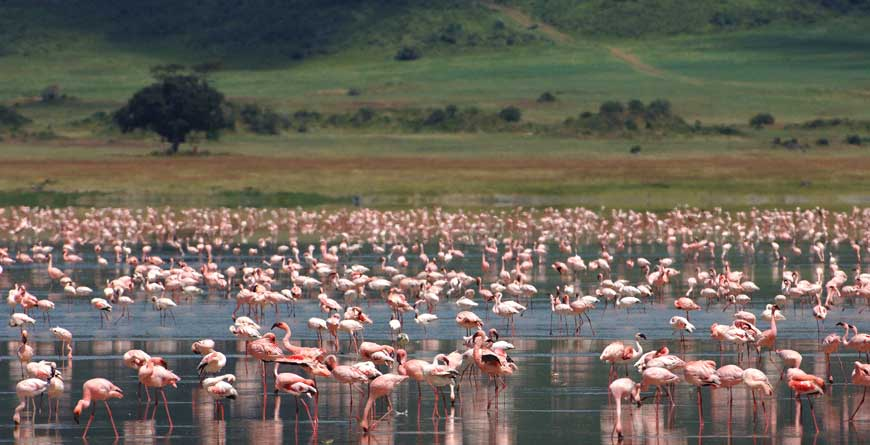 &Beyond Ngorongoro Crater Lodge Flamingos