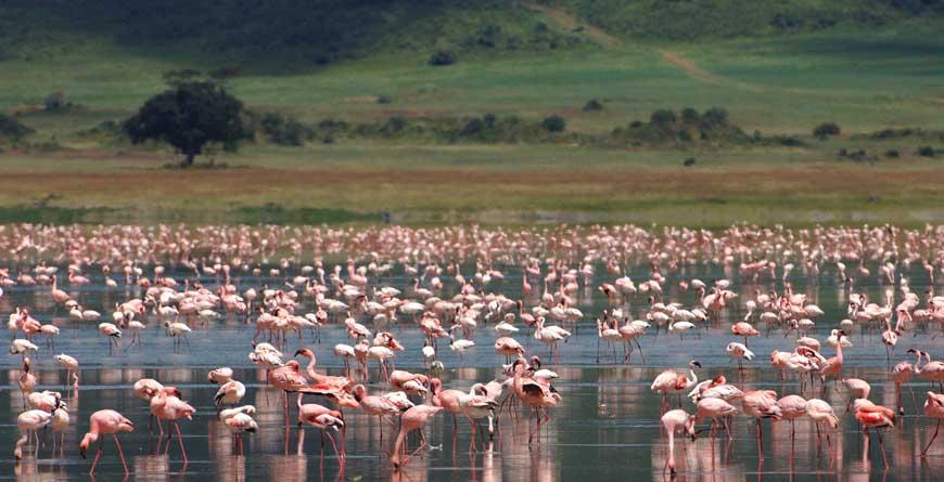 &Beyond Ngorongoro Crater Lodge Flamingos