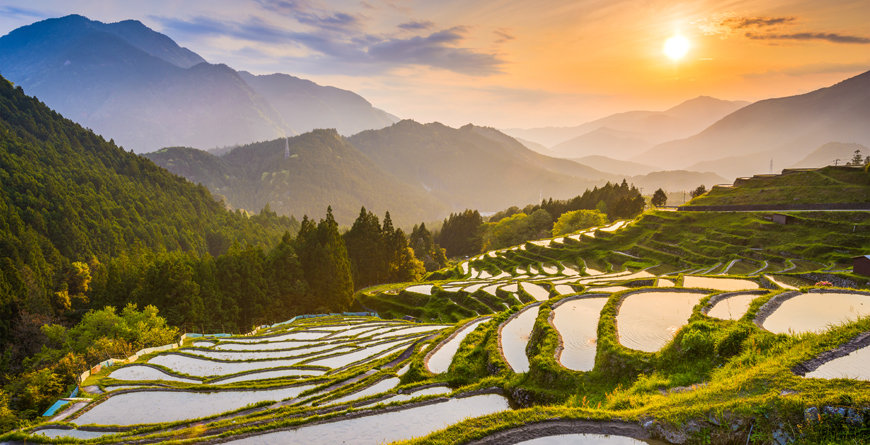 Rice Terraces, Courtesy Shutterstock