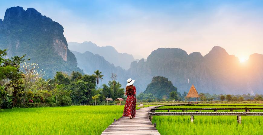Rice Fields Courtesy Shutterstock