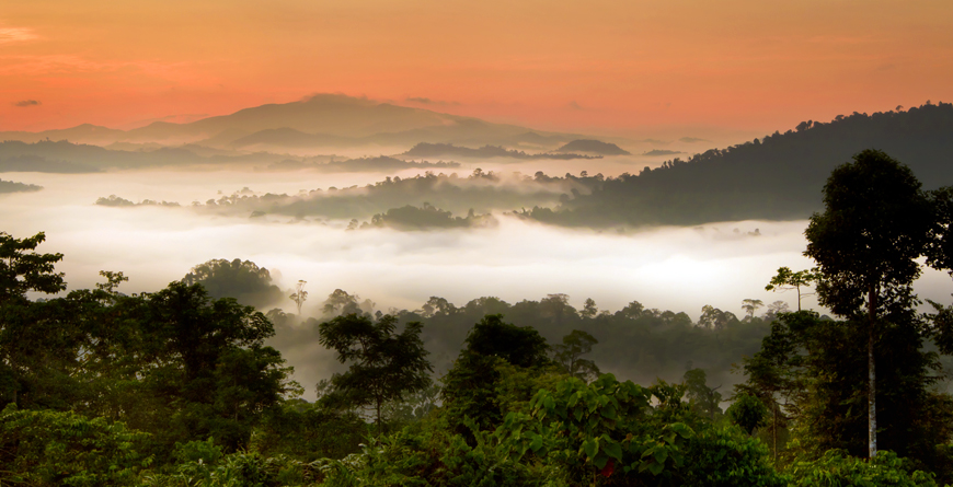 Danum Valley, Credit Shutterstock