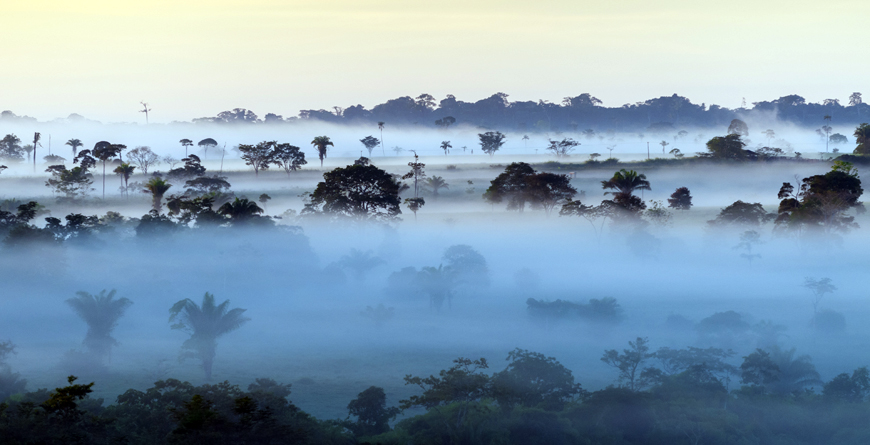 Amazon Rainforest, Credit ANDRE, DIB, Shutterstock.com