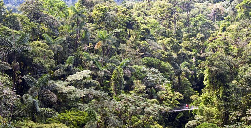 Arenal Forest, Credit Nayara Springs