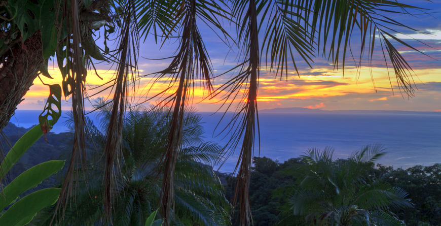 Nicoya Palm Trees
