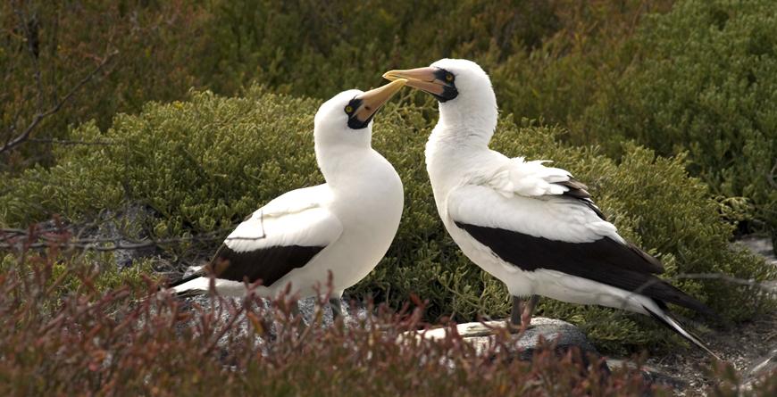 Galapagos Birds, Credit Ecoventura