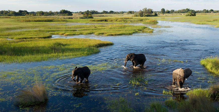 Jacana Camp, Courtesy Wilderness Safaris & Dana Allen
