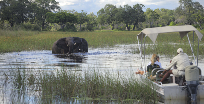 Boating with the Elephants