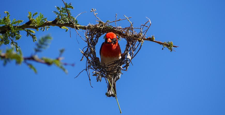 House Bird, Credit Lewa House