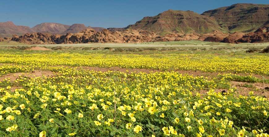 Wilderness Damaraland Flowers, Credit Dana Allen