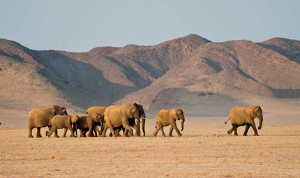 Wilderness Damaraland Camp Elephants, Credit Olwen Evans