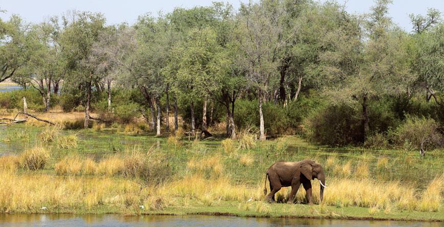 Lower Zambezi National Park - Bushbaby Travel: Inspiring ...