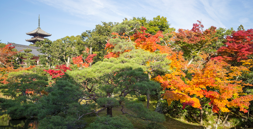 Ninnaji in Autumn, Credit Inside Asia