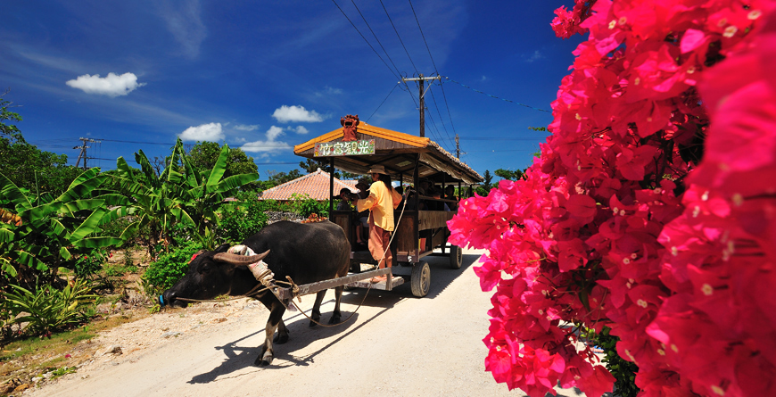 Water buffalo, Credit Inside Asia