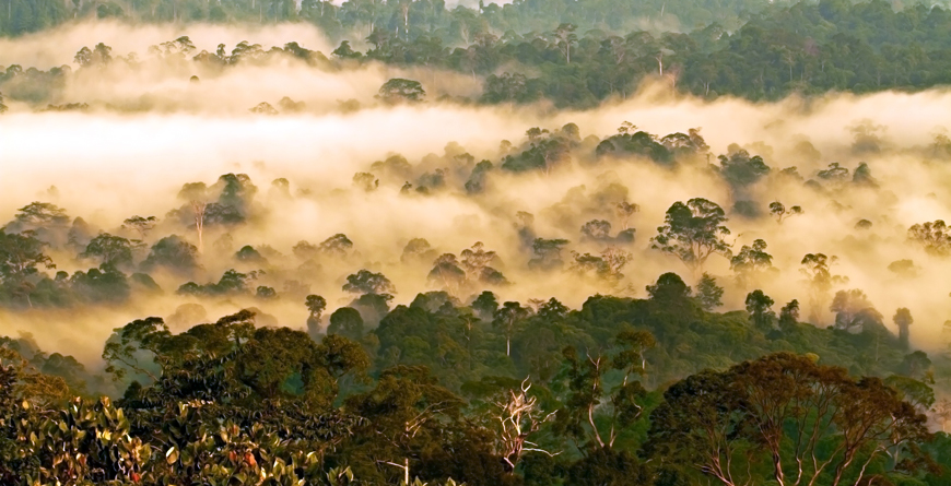 Danum Valley, Credit Shutterstock