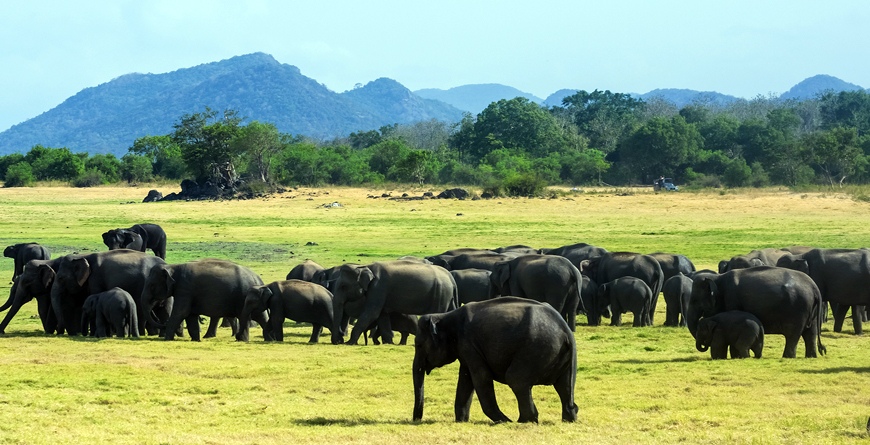 Elephants credit Shutterstock