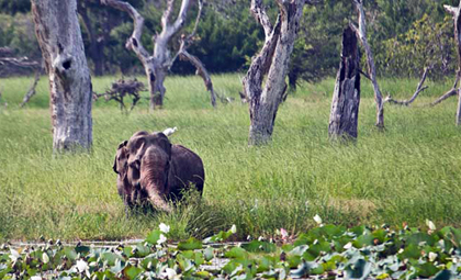 National Parks Yala