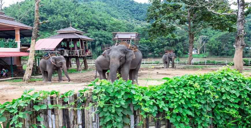Elephants, Credit Jianghai Studio Shutterstock