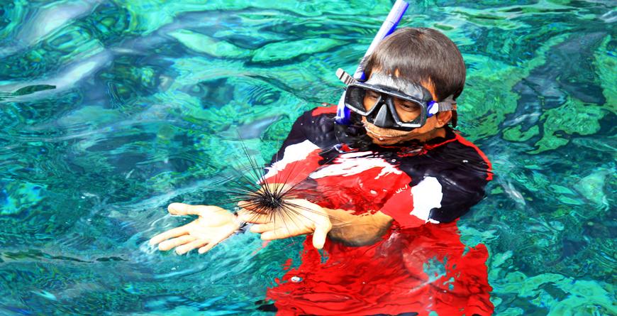 Sea Hedgehog, Koh Rok, Credit kalapangha Shutterstock