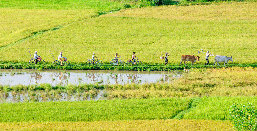 Farmers of the Mekong Delta, Courtesy Shutterstock