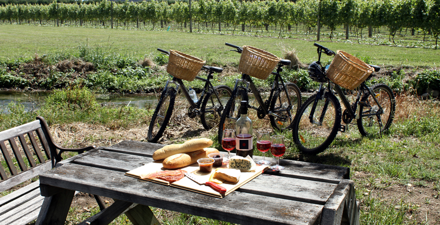 Picnic in a Vineyard