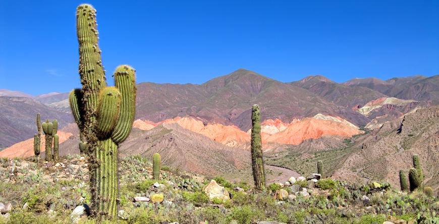 Pasacana Cactus, Credit Eduardo Rivero, Shutterstock.com
