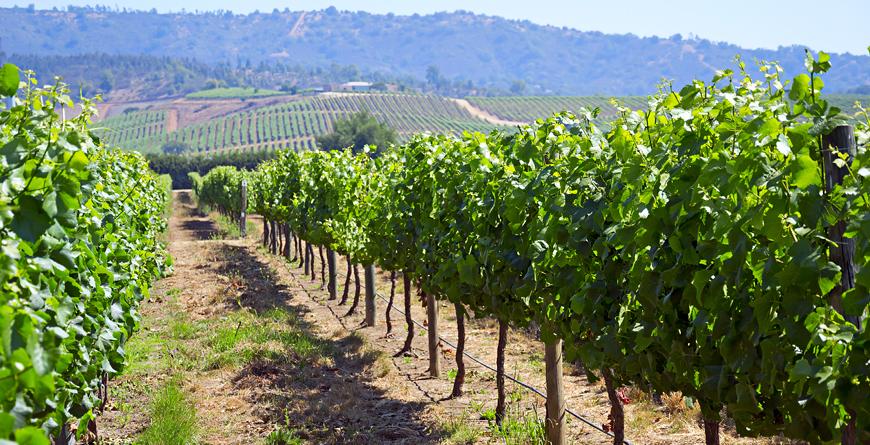 Casablanca Valley Vineyard, Credit Longtaildog, Shutterstock.com