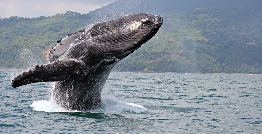 Marino Ballena National Park, Credit Claude Huot, Shutterstock.com
