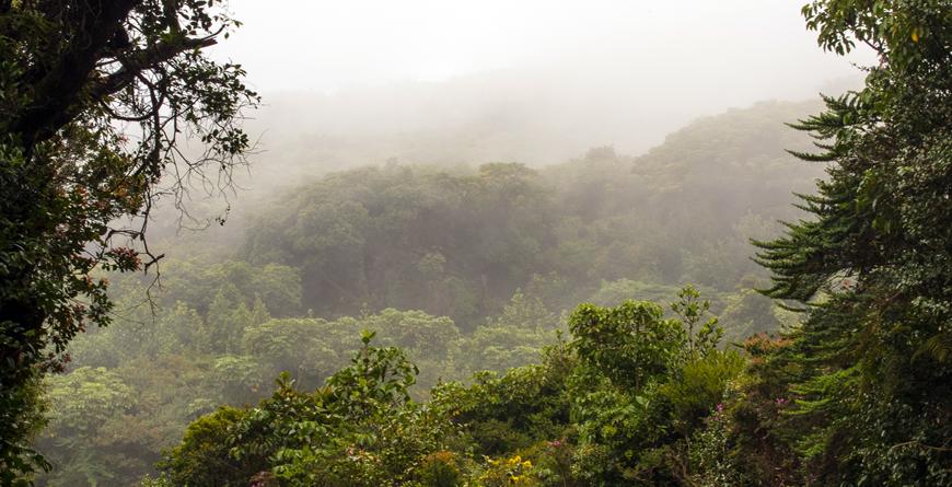 Cloud Forest, Credit Elliotte Rusty Harold, Shutterstock.com