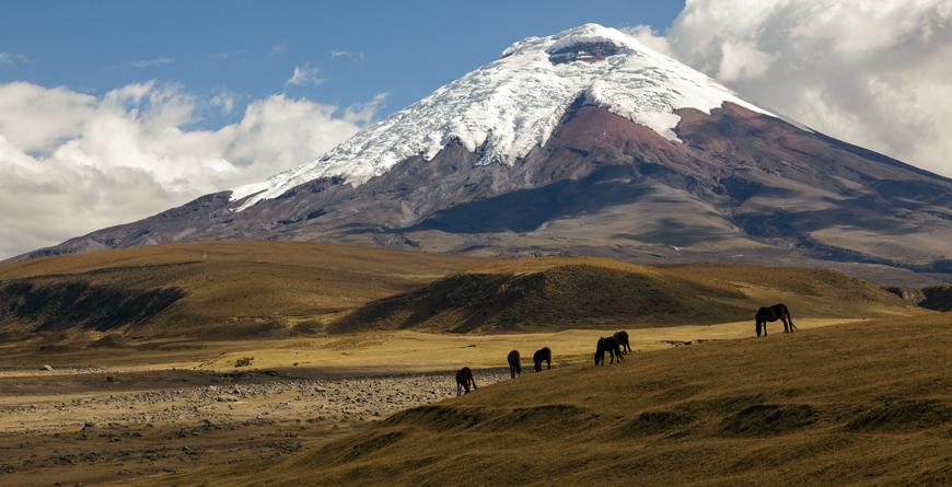 Quito Cotopaxi Volcano Wild Horses, Credit Ecuador postales, Shutterstock.com