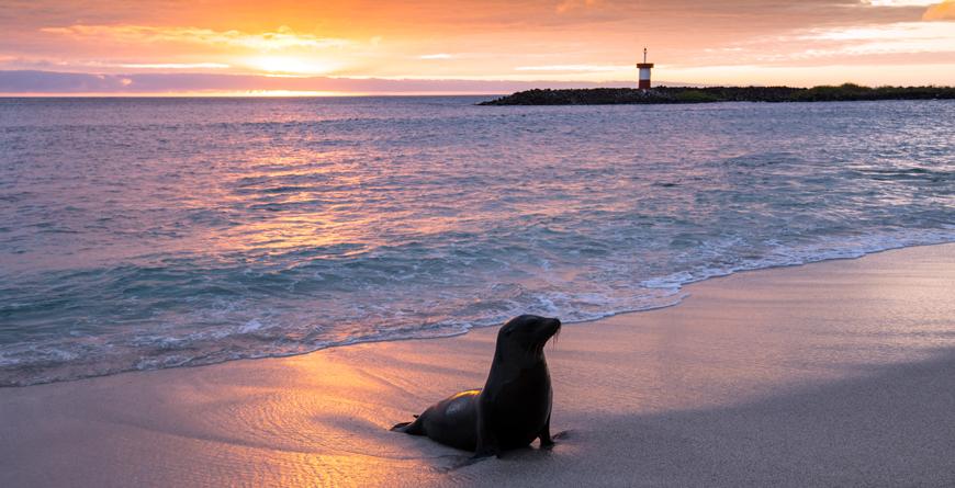 Baby Fur Seal at Punta Carola, Credit Alberto Loyo, Shutterstock.com