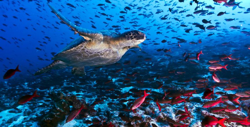 Turtle, Credit Luiz Filipe Vpuntel, Shutterstock.com