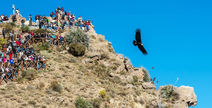 Condors, Credit Shutterstock