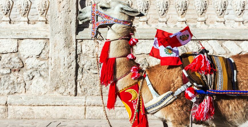 Llama, Credit Shutterstock