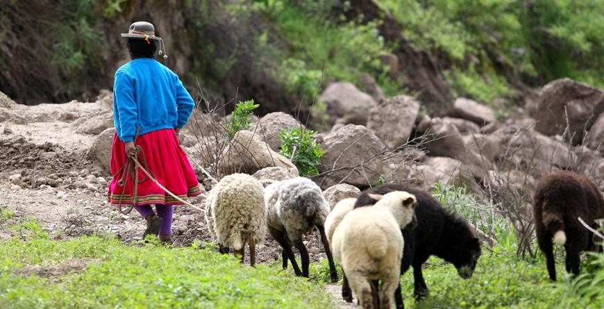 Peruvian Shepherd, Credit Marco Alhelm, Shutterstock