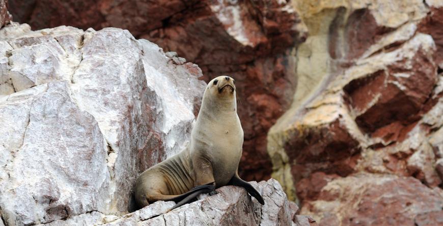 Sea-lion, Credit Viajes Pacificos