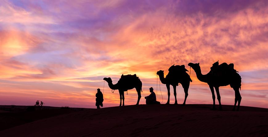 Camel-safari, Courtesy Park Hyatt Abu Dhabi