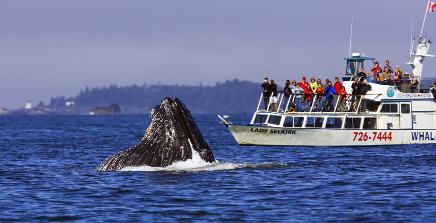 Jamie's Whaling Station, Credit BC, Matthew Maran