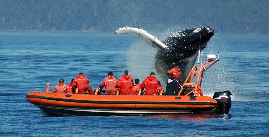 Orca, Credit Tourism Victoria Images