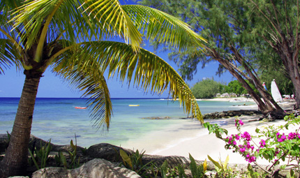 Palm Tree Beach, Credit Coral Reef Club