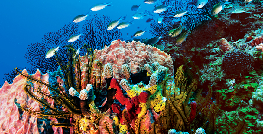 Scuba Diving, St.Lucia